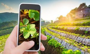 vers une agriculture smart